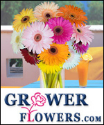 Giant Gerbera Daisy Bouquet