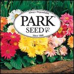 Gerbera Daisy Seed